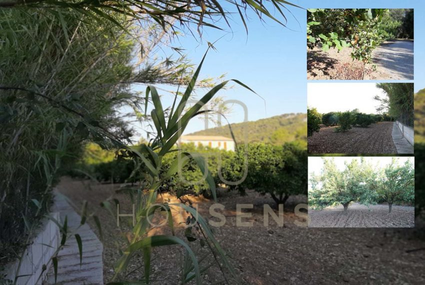 Luxury Villa in Pollensa Mallorca on sale Gatells (42)